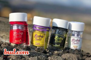 Bud's Picks Best Cannabis Prerolls - Jeeter